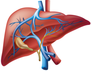 perfil analisis funcionamiento hepatico